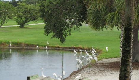Image of a pond on the course at Manatee Golf Course